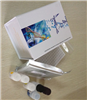 小鼠c-fos(c-fos)elisa檢測試劑盒